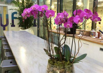 Interior Landscaping Orchid & Kentia