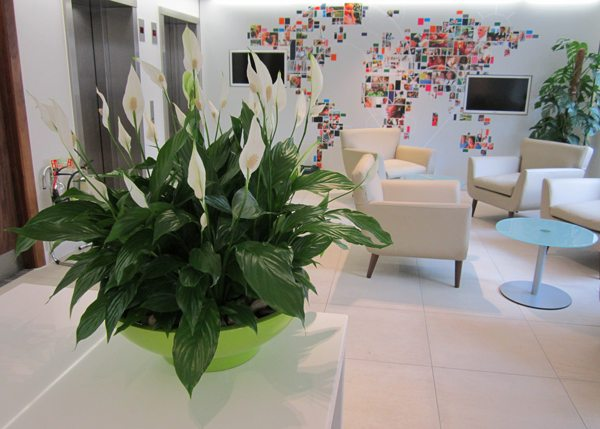 reception-plant-display