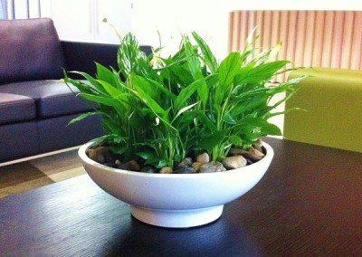 white-table-bowl