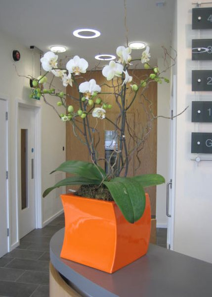 Interior Landscaping, Reception & Office Plant and Orchid Displays